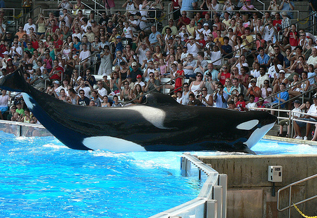 Orca That Killed Orlando Sea World Trainer Had Killed Before