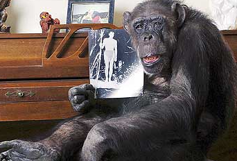 Cheetah, the chimp who acted with Johnny Weismuller's Tarzan in 1932, has died at 80 (that's right, 80)